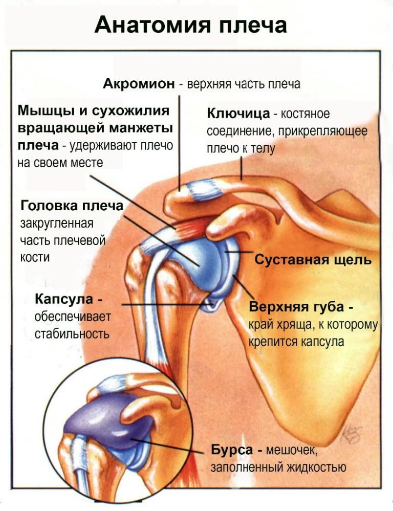 как лечить плечевой суставов