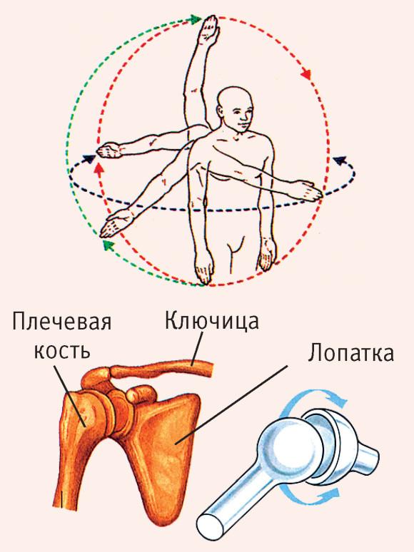 Функции сустава