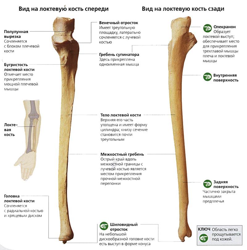 классификация переломов косте образующих локтевой сустав