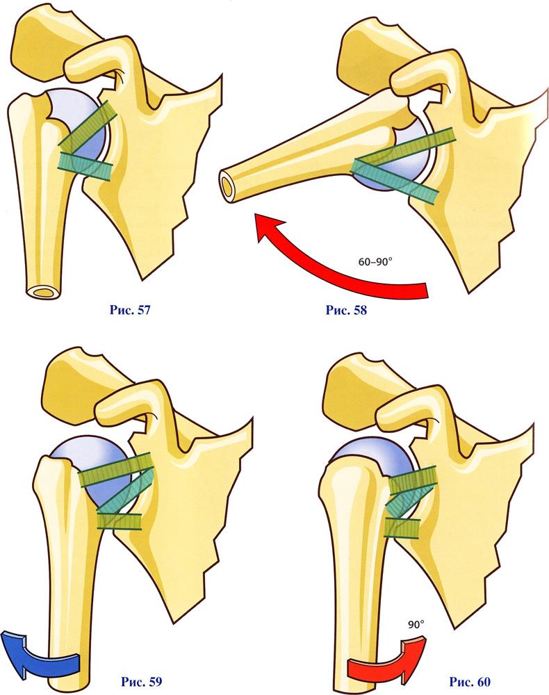 плечевой сустав как он работает
