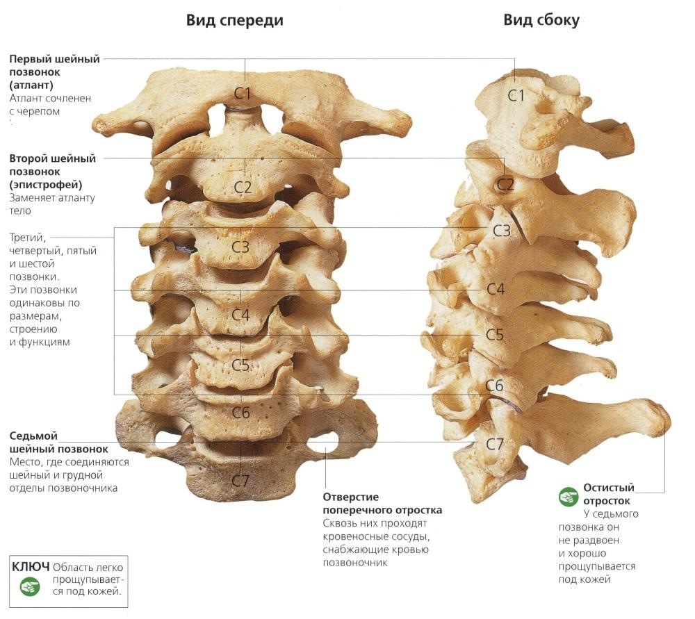 Ne oldu Osteokondroz