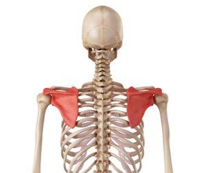 какие мышцы болят в плечах после тренировки