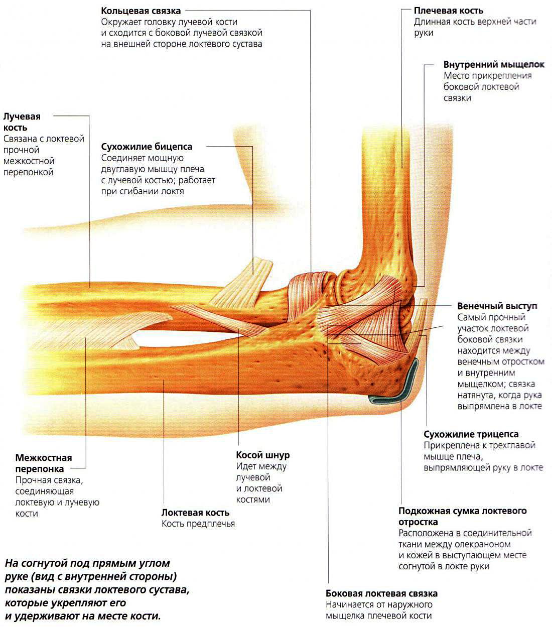ночные боли в локтевом суставе